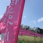 霧島高原まほろばの里 鹿児島で九州最大級の芝桜が楽しめる場所