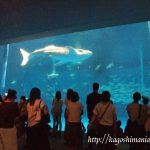 鹿児島市 かごしま水族館はジンベイザメやイルカに会える場所