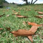 鹿児島市都市農業センター 9月のコスモス状況と秋の風景